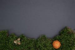 Kritisera brädet med mossa, ekollonar och pumpa Arkivfoton