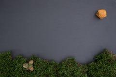 Kritisera brädet med mossa, ekollonar och pysalis Arkivbilder
