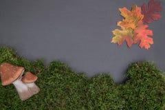 Kritisera brädet med mossa, lämnar och plocka svamp Royaltyfria Foton