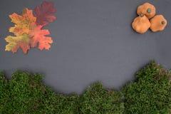 Kritisera brädet med mossa, pumpa och sidor Arkivbilder