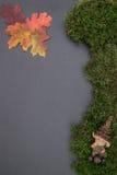 Kritisera brädet med mossa, sidor Royaltyfri Foto