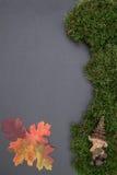 Kritisera brädet med mossa, sidor och gnom Royaltyfria Bilder