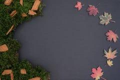 Kritisera brädet med mossa, sidor och trä Arkivbilder
