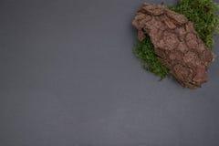 Kritisera brädet med mossa, skäll Arkivfoton