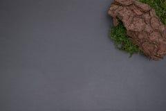 Kritisera brädet med mossandskället Arkivbilder