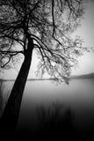 Kritisera trädet på kusten av en tyst sjö Arkivbild