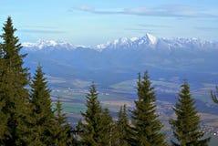 Krivan peak. Slovakia, viewed through high spruce trees stock photo