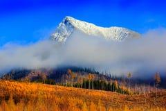Krivan vinter Royaltyfria Bilder