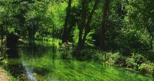 Krka flod i skog arkivfilmer