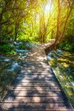 Krka national park wooden pathway in the deep green forest. Colorful summer scene of Krka National Park, Croatia, Europe. Wooden stock image