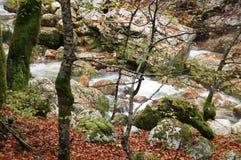 Krka river, Slovenia, forwest Royalty Free Stock Photo