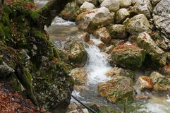 Krka river, Slovenia, forwest Royalty Free Stock Image