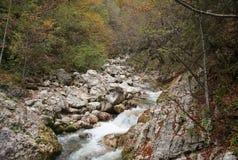 Krka river, Slovenia, forwest Stock Photo
