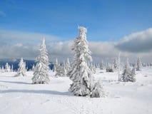 Krkonoše mountains frozen trees. Krkonoše mountains - frozen trees. Snow in CZECH REPUBLIC. Snowy tree Stock Photography