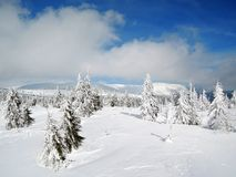 KrkonoÅ ¡ e山-结冰的树 免版税库存照片