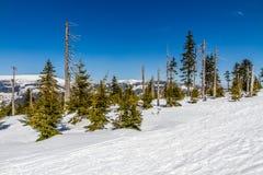 Krkonose大山在冬天- Czechia 免版税库存照片