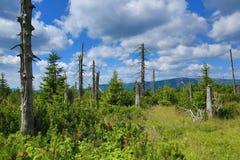 Krkonose山,捷克,波兰 免版税库存图片