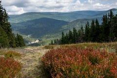 Krkonose berg nära Harrachov, Tjeckien royaltyfri bild