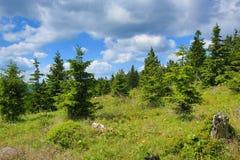 Krkonose-Berge, Tschechische Republik, Polen Stockfotografie