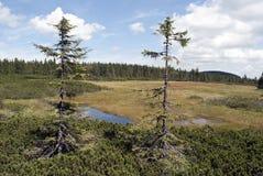 Krkonose - Gigantyczne góry Fotografia Royalty Free