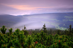 Krkonose mountain, forest in the wind, misty landscape, with fog and clouds, mountain pine, Stock Image