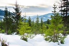 Krkonose, republika czech Zdjęcie Royalty Free