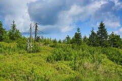 Krkonosebergen, Tsjechische Republiek, Polen Royalty-vrije Stock Afbeelding