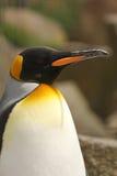 król pingwin Obraz Stock
