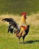 Królewiątko gospodarstwo rolne Fotografia Stock