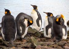 Królewiątko pingwiny w Południowym Gruzja Antarctica Zdjęcie Stock