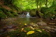 Kroatië - Aardpark Papuk - Boskreek stock fotografie
