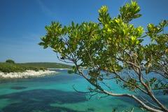Kroatien-- Losinj Insel Stockfotos