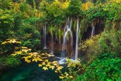 kroatien Plitvice Seen Verzweigen Sie sich mit gelben Blättern gegen den Hintergrund eines Wasserfalls Lizenzfreie Stockbilder