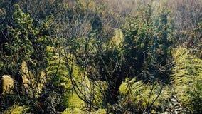 Krocia młoda pająk podróż sieciami Pajęczyna zdjęcie wideo
