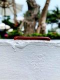 Krocionoga odprowadzenie na wierzchołku białego cementu ściana przed plenerowym ogródem fotografia royalty free