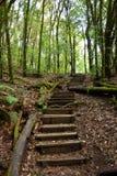 Kroczy ot drewnianego schodek w lesie Obraz Royalty Free