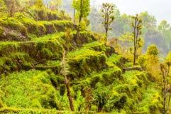Kroczy rolnego narastającego pięknego zielonego banatka strzał przeciw niebieskiemu niebu i biel chmurom w Północnych ind Shimla  fotografia royalty free