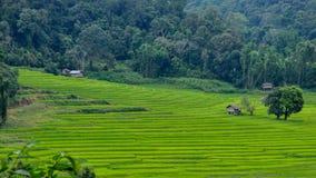 kroków ryż pole Obraz Royalty Free