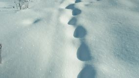 kroki śnieżni głęboko zdjęcie wideo