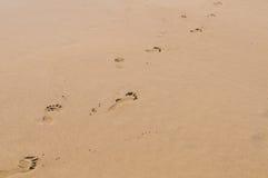 kroki plażowa fala obraz stock
