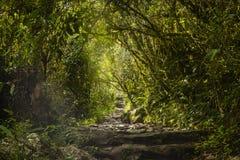 Kroki przez drewien Mach Picchu Fotografia Stock
