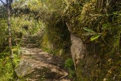Kroki przez lasu Mach Picchu Obraz Royalty Free