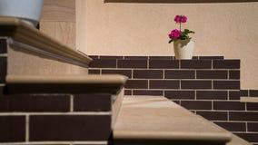 Kroki taflujący, kamień Fotografia Royalty Free