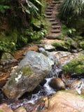 Kroki w lesie Obrazy Stock