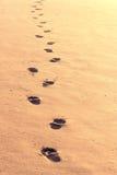 Kroki w piasku Fotografia Stock