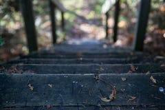 Kroki w spadku lesie, Kanada Obrazy Royalty Free