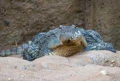 Krokig mun Croc Royaltyfri Bild