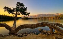 krokig tree Arkivfoton