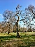 krokig tree Royaltyfri Fotografi