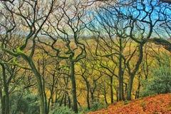 Krokiga bendy träd Arkivfoto